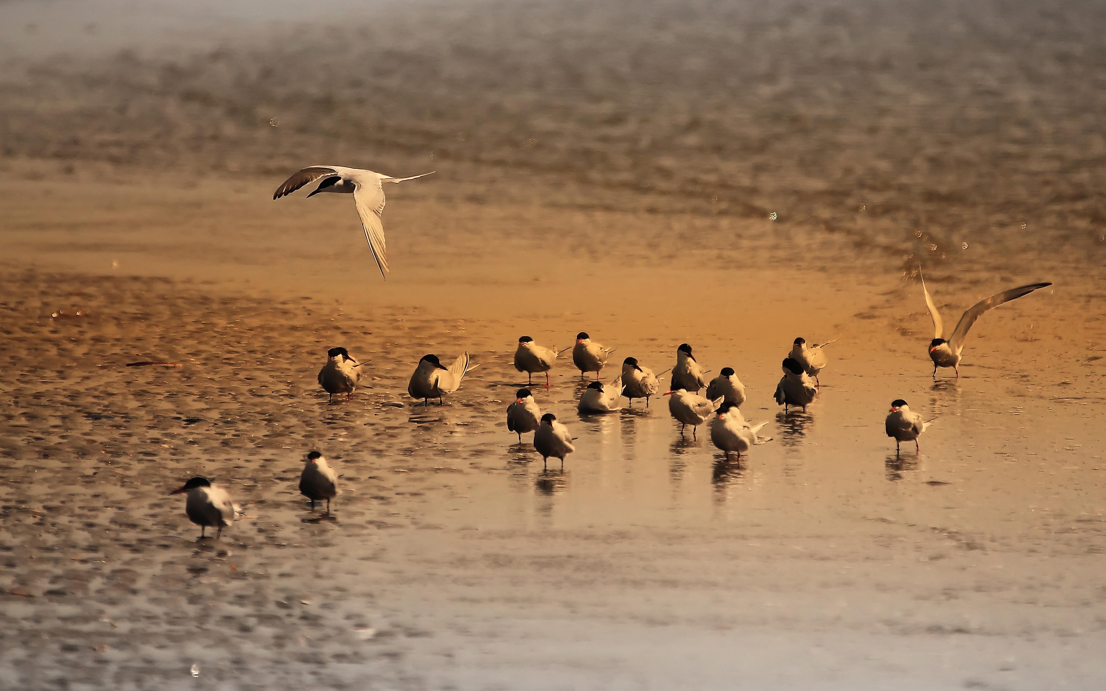 Vroege Vogels Foto Vogels Ijmuiden Strand