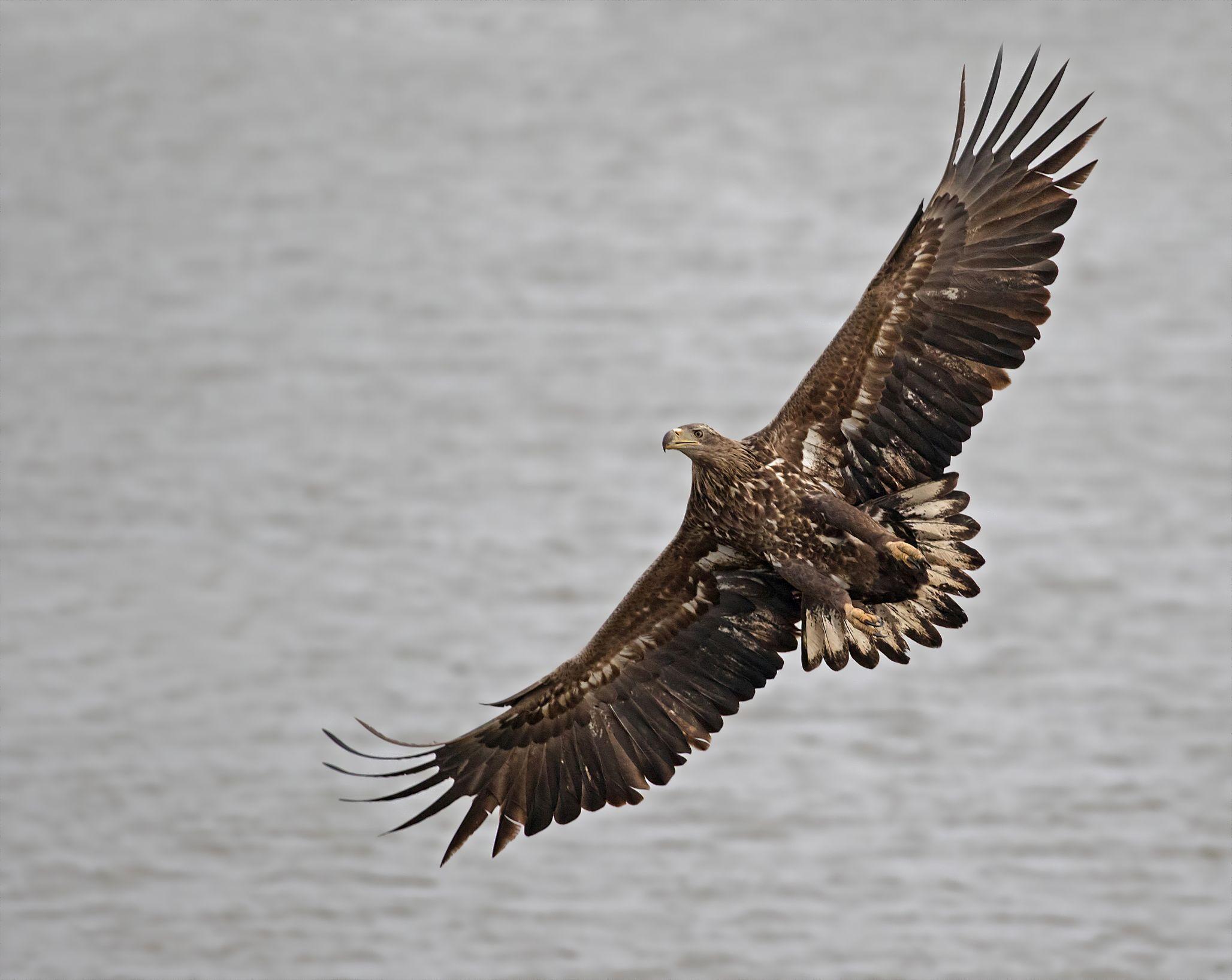 Vroege vogels foto vogels zeearend for An und verkauf gebrauchtmobel