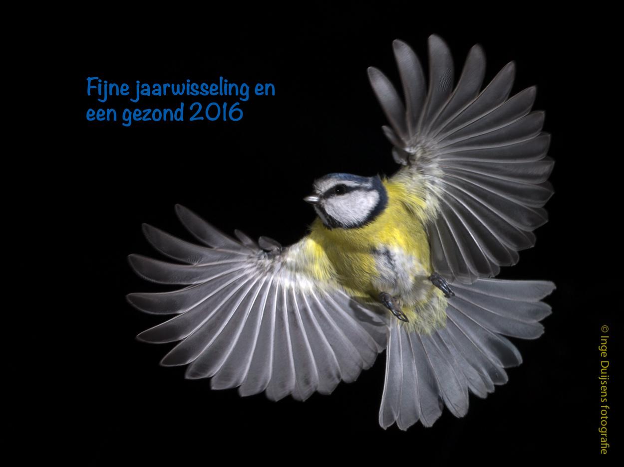 Vroege Vogels Foto Vogels Gelukkig Nieuwjaar