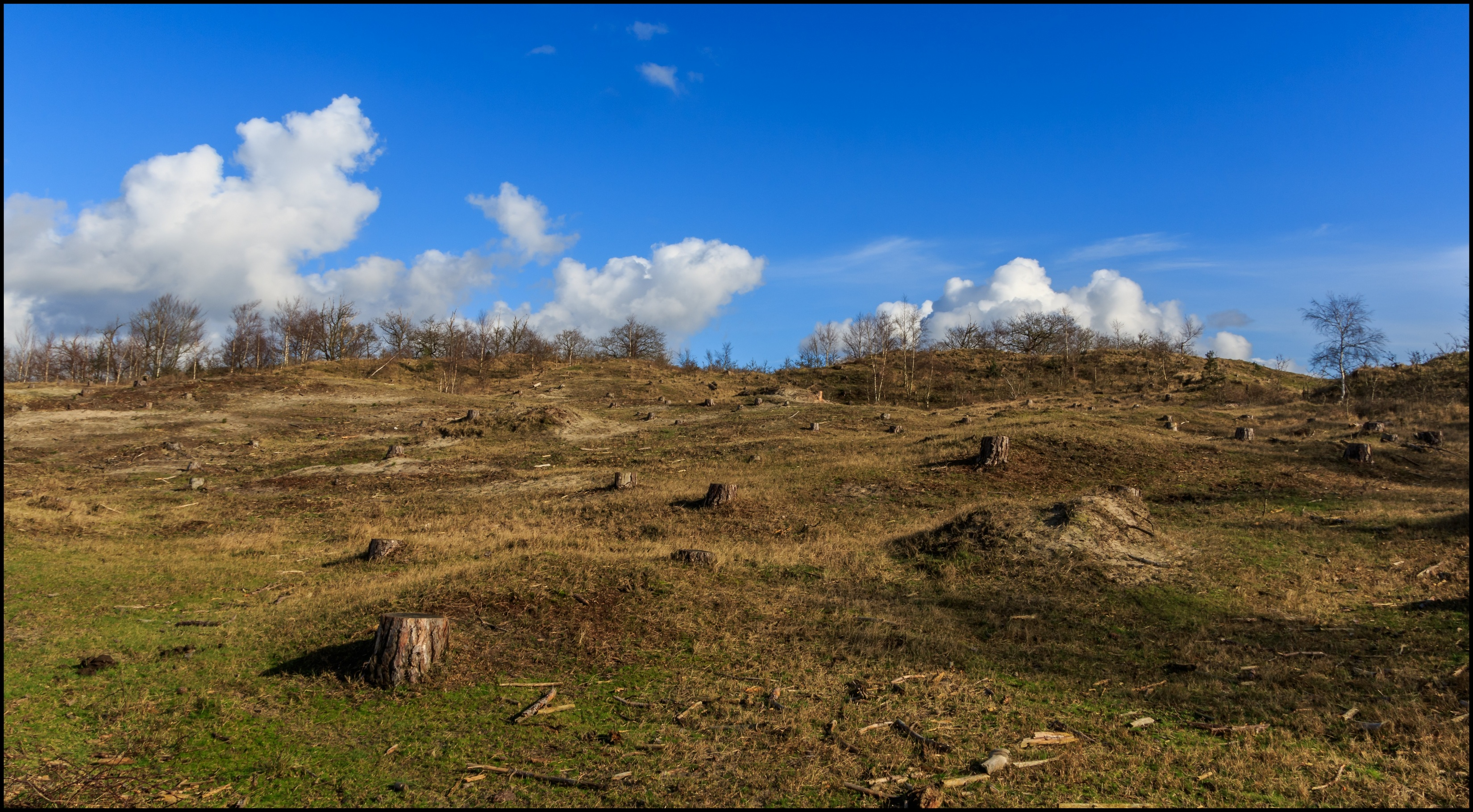 Vroege Vogels Foto Weer En Landschap Bosduingebied Bergen Nh