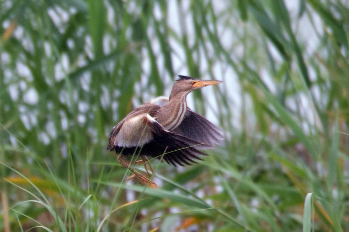 Vroege vogels foto vogels woudaapje for An und verkauf gebrauchtmobel