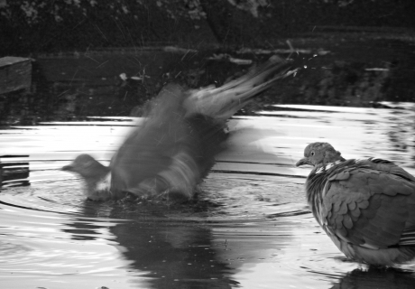 Vroege vogels foto geleedpotigen winterslaap lhb - Foto in een bad ...