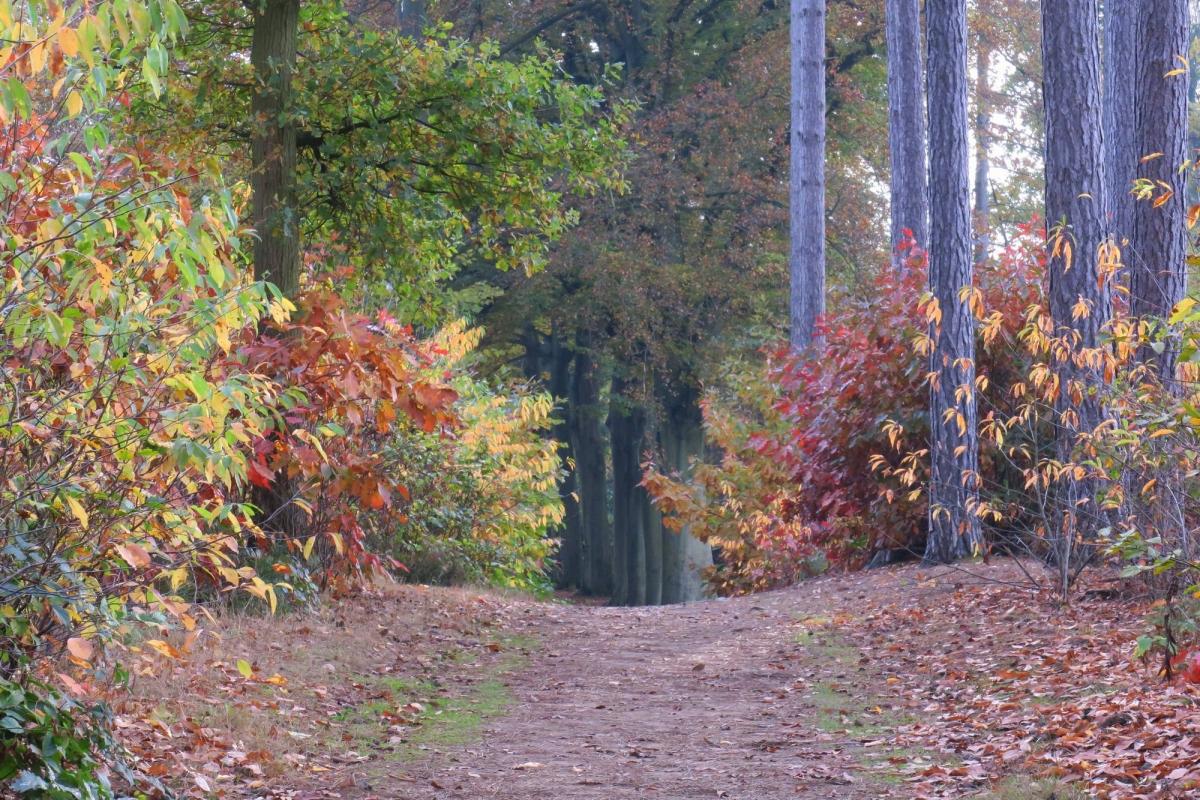 Kleur Veel Kleur : Vroege vogels foto weer en landschap veel kleur in het bos