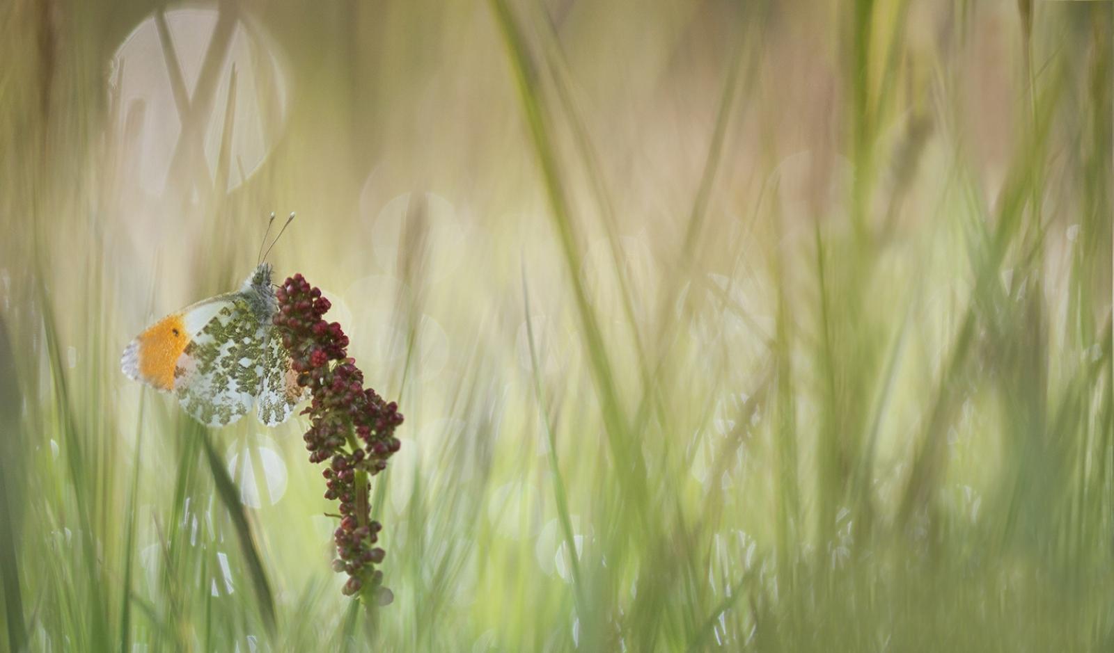 Vroege Vogels Foto Geleedpotigen Waiting For My Love