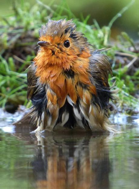 Foto 39 s in de vroege vogels foto community - Foto in een bad ...
