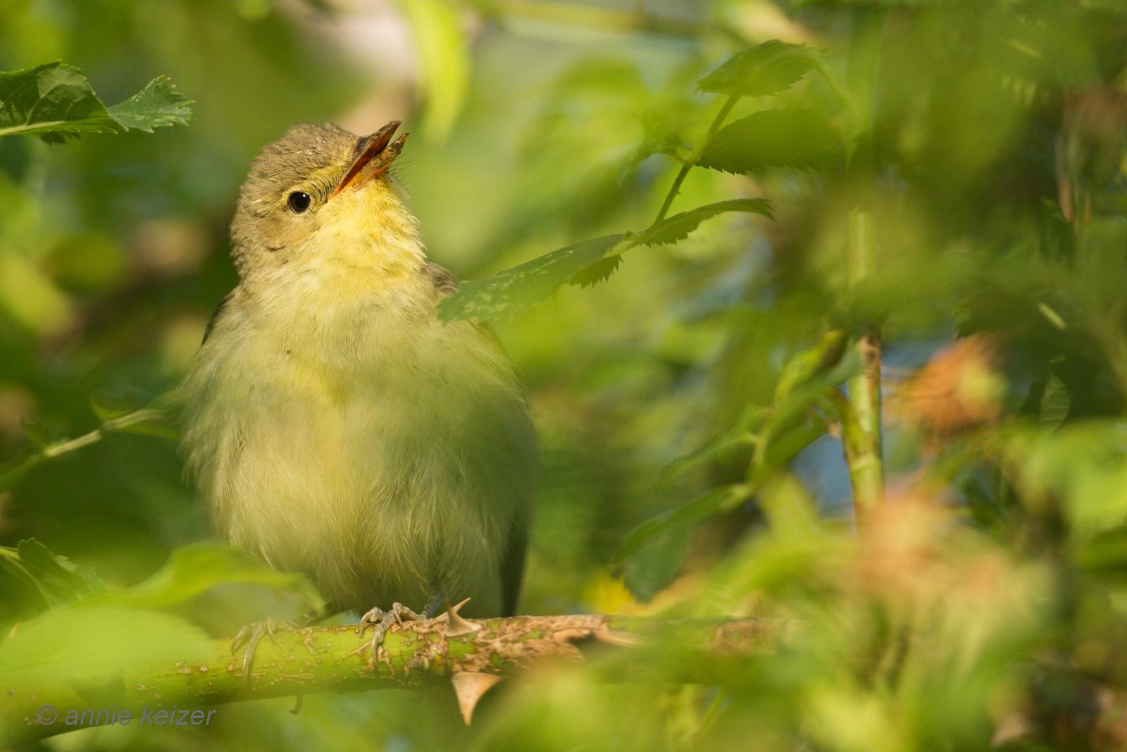 Uitgelezene Vroege vogels Foto - Vogels - altijd zoeken naar deze vogel LO-22