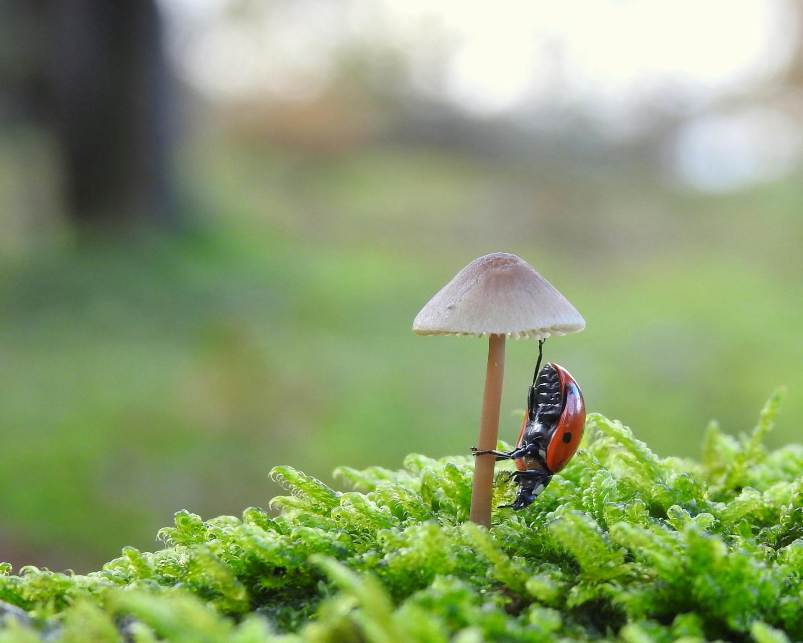 Ladybug on mushroom